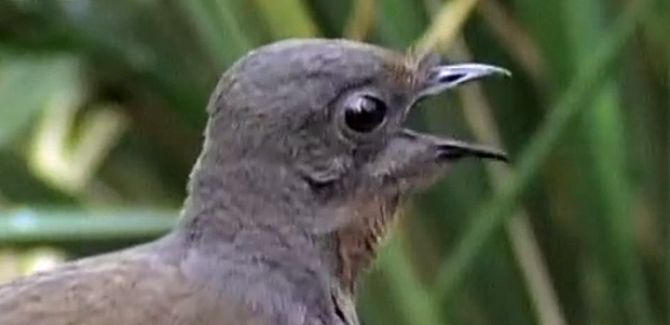 Vogel Kettensäge
